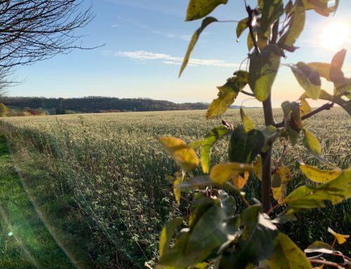 BI Düssel-West warnt vor neuer Trabantenstadt